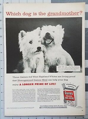 1957 Highland White Terriers Gaines Dog Meal 1950s Vintage Print Ad