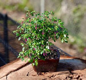 Many kinds of Plants are on sale--welcome to browse Point Cook Wyndham Area Preview