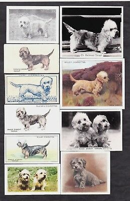 19 Different Vintage DANDIE DINMONT TERRIER Tobacco/Candy/Tea Dog Cards Lot