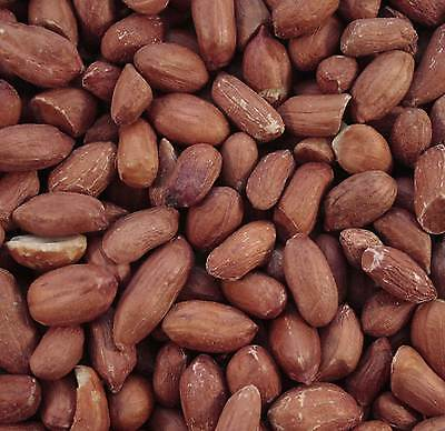 2KG MALTBY'S WILD BIRD PEANUTS PREMIUM QUALITY WHOLE SAFE NUTS NO SPLITS