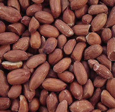 Premium Grade Wild Bird Safe Peanuts 1.5 Kg Bird Food Nuts