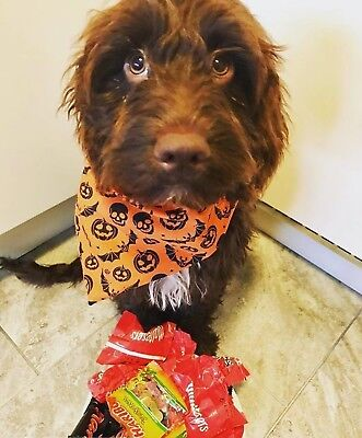 Halloween Dog Bandana Slip Slide On Collar Scarf Orange Pumpkins Neckerchief
