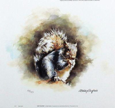 "MANDY SHEPHERD ""Grey Squirrel"" wildlife LTD ED SIGNED! SIZE:23cm x 24cm NEW RARE"