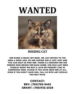 Missing Cat from Salisbury Village Area