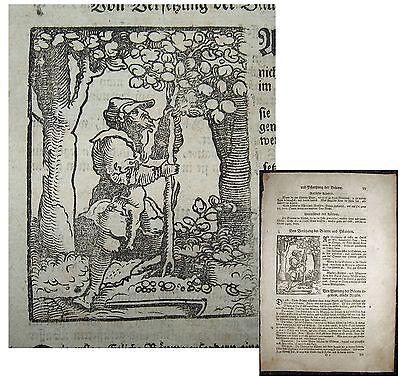 GÄRTNER, Gartenbau. Originaler Holzschnitt von LONITZER 1557 (1700)