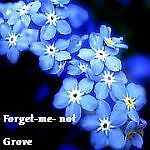 Forget-me-not Grove