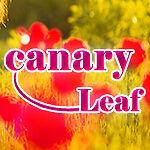 Canary_leaf