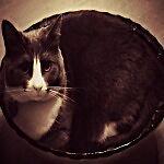 Cat In A Bowl Bazaar