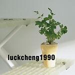 luckcheng1990