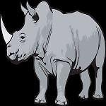 White Rhino Bizarre!