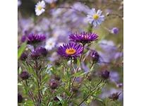 Nursery Production Manager for Specialist Wholesale Growers of Hardy Herbaceous Plants