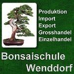 Bonsaischule Wenddorf