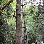 Tree Services Vancouver Island