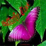 Butterflytrade