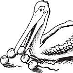 Der Perlikan