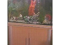 SMALL AQUARIUM FISH IN NEED OF NEW HOME