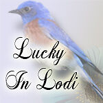 Lucky In Lodi