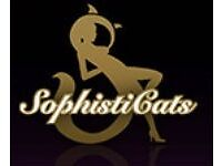 Receptionist - Host for Sophisticats Gentleman Club