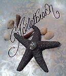 Starletbeach