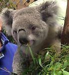 Koalatee's and More!