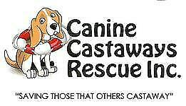 canine castaways rescue
