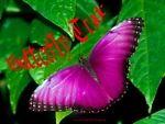 butterflytrade2013