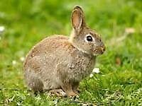 Rabbit run/enclosure
