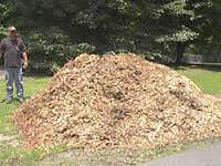Wood chip mulch and Firewood for free for early birds