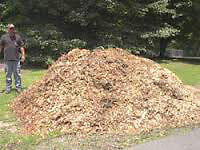 Free wood chip mulch and firewood for early birds only.