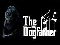Dog Walker South West London - must own car.