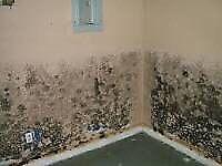 Restoration- mould Abatement/ Water damage/ Asbestos Removal