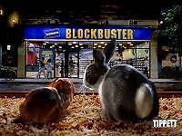 Blockbuster Movie Store For Sale - WIWO - Over $80 000 In Stock Pacific Pines Gold Coast City Preview
