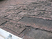 Need a new roof? How about a repair?