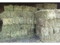 Good quality small square hay bales for sale