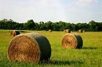 Looking for 3 large round hay bales