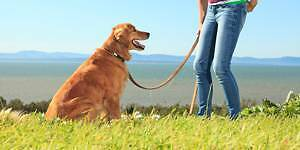 D&J Dog Walking Tusmore Burnside Area Preview