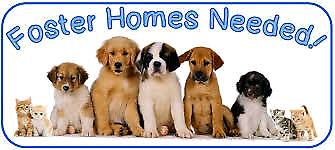 A Mini Rescue are looking for foster carers