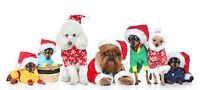 Call and book your spot for grooming in time for CHRISTMAS!!!