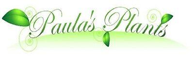 Paula's Plants
