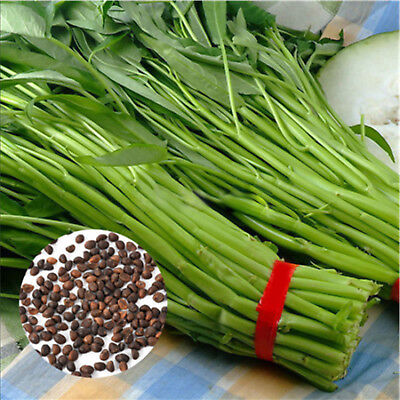 400PCS/Bag Vegetable Garden Seeds Water Kang Plant Leaf Green Spinach Seeds New