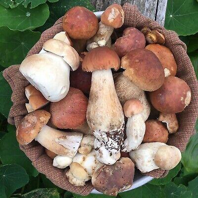 Dried Porcini Mushrooms Boletus Edulis California King Gourmet Chef Foodie  ()