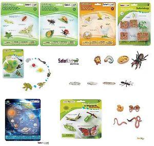 Cycle de vie fourmi papillon de nuit poulet coccinelle papillon safari ltd ebay - Duree de vie papillon de nuit ...