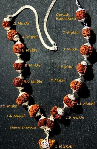Indrakshi Mala / Combination of 1 Mukhi Rudraksh to 21 Mukhi Rudraksha in Silver