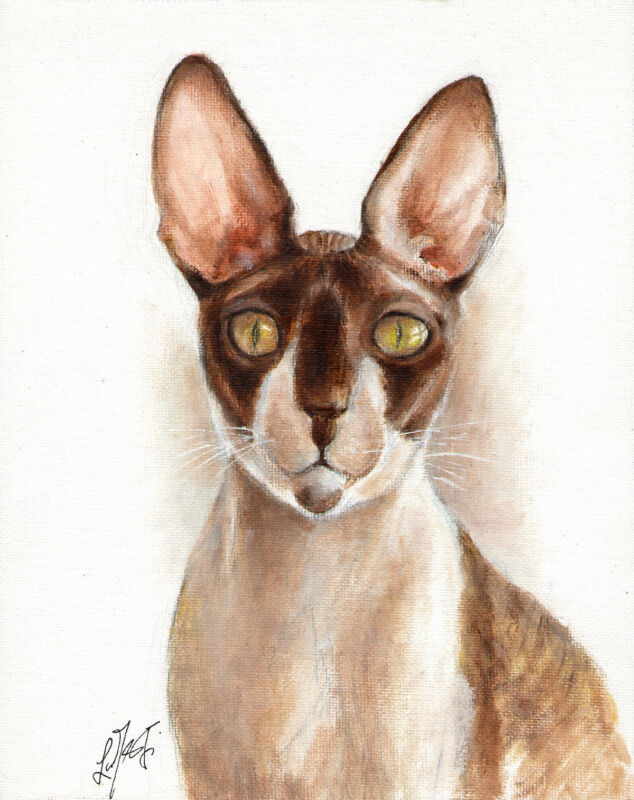 Original Oil CAT Portrait Painting Art Artwork CORNISH REX Kitten SIGNED