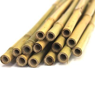 10 Stück  Hochwertige Bambusstäbe Tonkinstäbe Pflanzstäbe 180 cm, Ø 13 - 16 mm