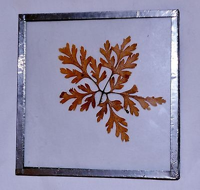 Autumn Leaf Decorations (Autumn Leaf Pressed in Glass with Pewter Trim Fall)