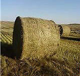 FOR SALE Flax Straw Round Bales