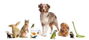 May Take ur Unwanted / Free Pets read below