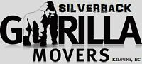________SILVERBACK GORILLA MOVING________