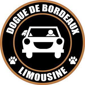 LIMOUSINE DOGUE DE BORDEAUX 5